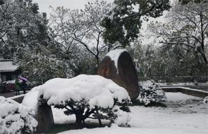 杭州花圃雪景缩略图